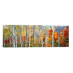 Japanese Fall Trees Canvas Art Print