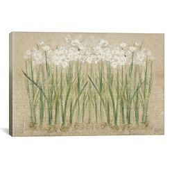 Narcissus Cool Canvas Art Print