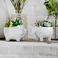 Succulents in Animal Planters