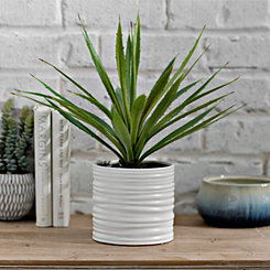 Yucca Plant in White Pot, 19 in.