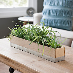 Air Plant Arrangement in Wood Planter