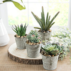 Succulents in Metal Pails