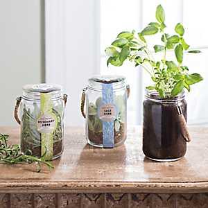 Lantern Jar Herb Kits
