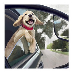 Motor Pup Canvas Art Print