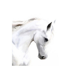 White Horse Profile Canvas Art Print