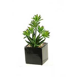 Dracaena Aloe Arrangement in Black Planter