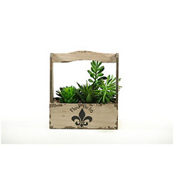 Succulent Arrangement in Fleur-de-lis Planter