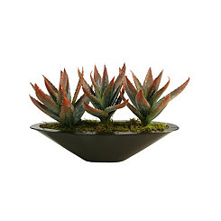 Aloe Arrangement in Metal Planter