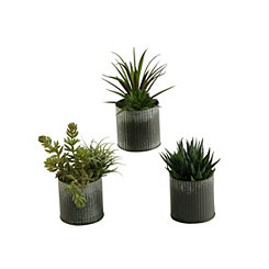 Aloe and Easter Grass Arrangements, Set of 3