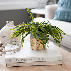 Fern Plant in Gold Pot, 8 in.