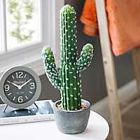 Cactus Arrangement in Cement Planter