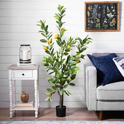 Lemon Tree, 5 ft.