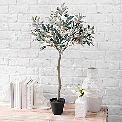 Olive Leaf Topiary, 3 ft.