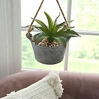 Agave Plant in Hanging Pot