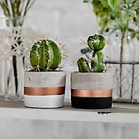 Cactus Arrangements in Concrete and Copper Pots