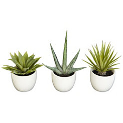 Southwest Agave Plants in Ceramic Pots, Set of 3