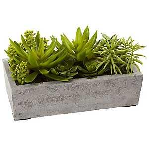 Succulent Arrangement in Concrete Planter