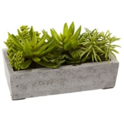 Succulent Arrangement in Concrete Planter