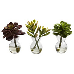 Succulents in Glass Vases, Set of 3