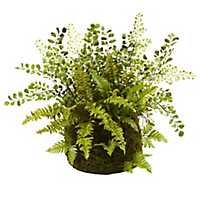 Mixed Fern Arrangement in Moss Planter