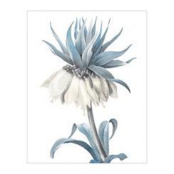 Redoute Fritillaire Blue Canvas Art Print