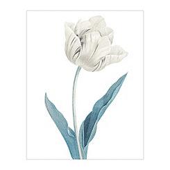 Redoute Tulipa Culta Blue Canvas Art Print