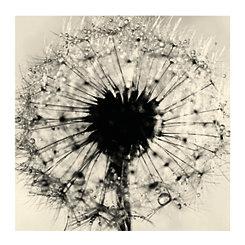 Black and White Dandelion Canvas Art Print