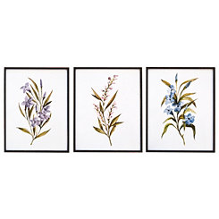 Wildflower Framed Art Prints, Set of 3