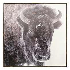 Snow Buffalo Canvas Art Print