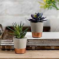 Succulent Arrangements in Concrete with Copper