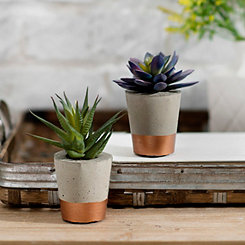 Succulent Arrangements in Concrete with Copper
