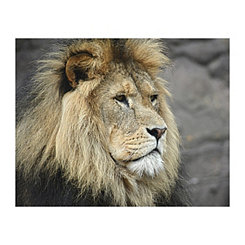 Lion Profile Canvas Art Print