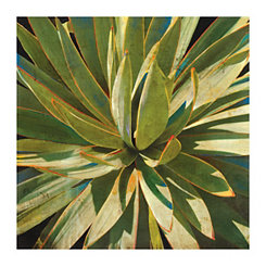 Sweet Agave Canvas Art Print
