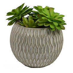 Succulent Arrangement in Round Cement Planter