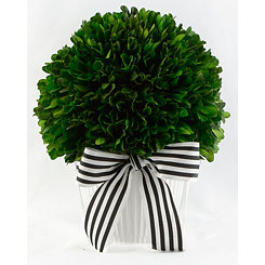 Boxwood Arrangement with Striped Ribbon, 9.4 in.