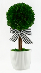 Round Boxwood Topiary with Striped Ribbon, 14 in.