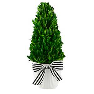Boxwood Cone Topiary with Striped Ribbon, 13.4 in.