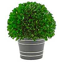 Boxwood Arrangement in Black Planter, 9.4 in.