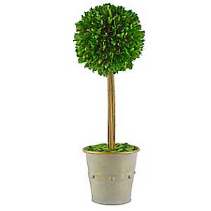 Round Boxwood Topiary in Studded Planter, 18 in.