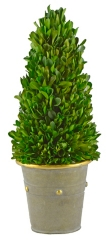 Boxwood Cone Topiary in Studded Planter, 13.5 in.