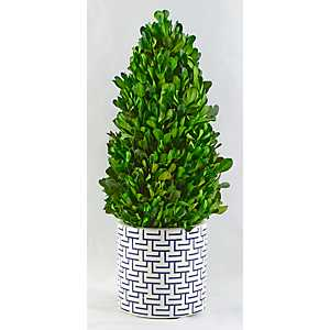 Boxwood Cone Topiary in Geometric Planter, 13.5 in