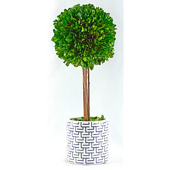 Round Boxwood Topiary in Geometric Planter, 14 in.