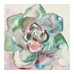 Watercolor Succulent IV Canvas Art Print