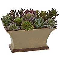 Succulent Arrangement in Brown Planter