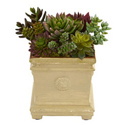 Succulent Arrangement in Antique Planter