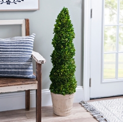 Spiral Cut Boxwood Topiary, 44 in.
