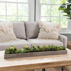 Succulents in Wooden Runner