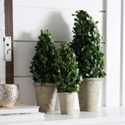 Preserved Boxwood Cone Topiaries, Set of 3