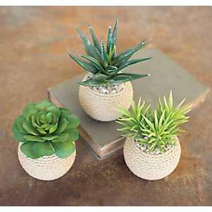Succulents in Roped Terra Cotta Pots, Set of 3