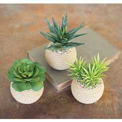 Succulents in Roped Terra Cotta Pots, Set of 3